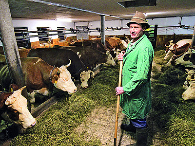 anbindehaltung kühe