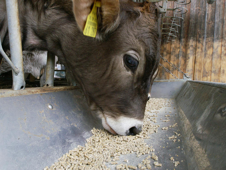 Stall kuh redewendung im lassen 100 %